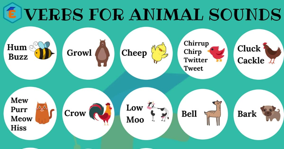 Verbs for Animal Sounds in English 6