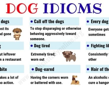Dog Idioms and Sayings | List of 35+ Interesting Idioms Related to Dog in English 1