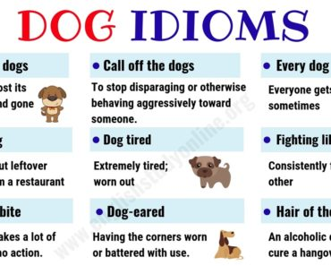 Dog Idioms and Sayings | List of 35+ Interesting Idioms Related to Dog in English 4