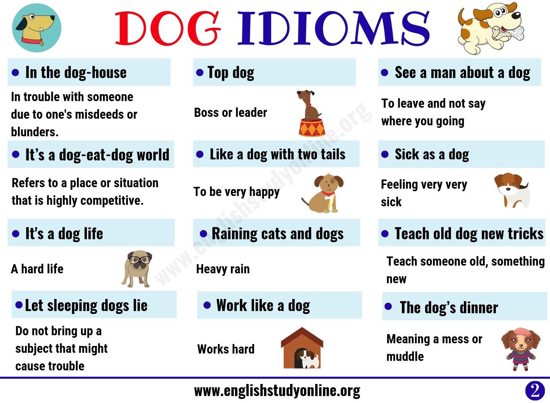 Dog Idioms & Dog Sayings