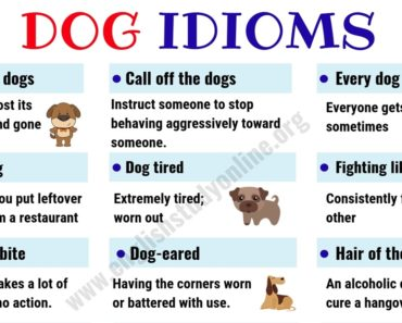 Dog Idioms and Sayings | List of 35+ Interesting Idioms Related to Dog in English 7