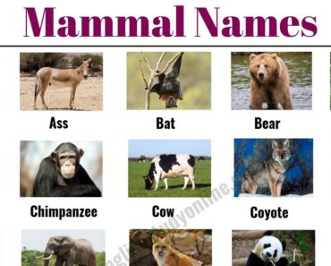 List of Mammals: 50+ Popular Mammal Names with Examples and ESL Pictures 7