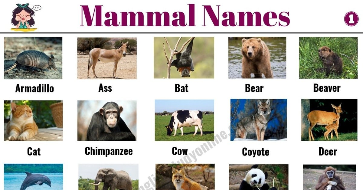 List of Mammals: 50+ Popular Mammal Names with Examples and ESL Pictures 1