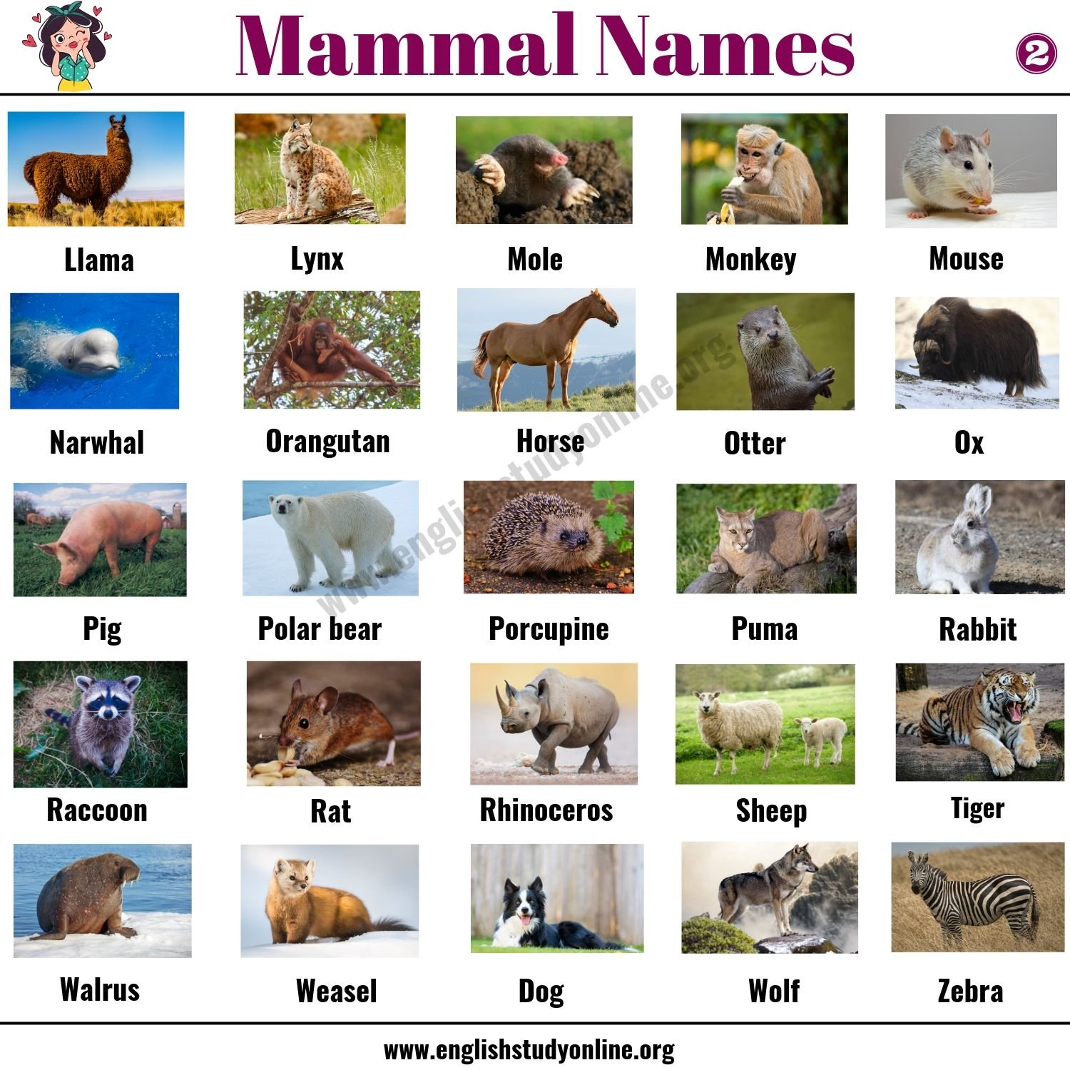 List of Mammals