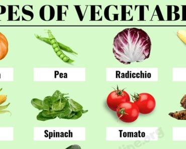 Types of Vegetables : 40 Most Popular Vegetable Names with ESL Pictures 6