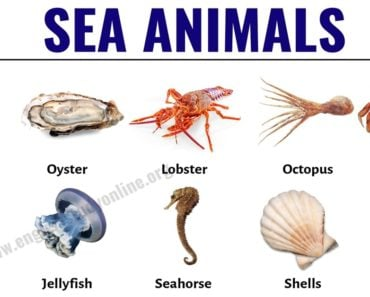 Sea Animals: List of 30+ Popular Sea Animals with ESL Pictures 4