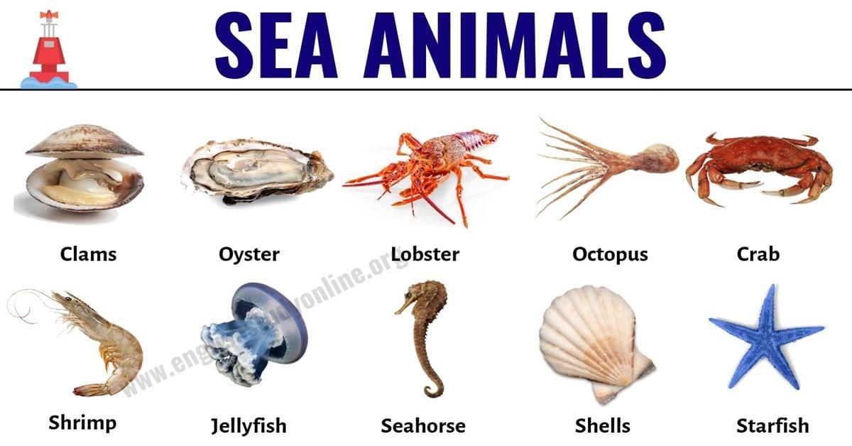 Sea Animals: List of 30+ Popular Sea Animals with ESL Pictures 1