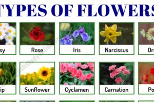 Types of Flowers: List of 50+ Popular Flowers Names in English 11
