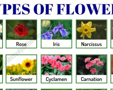 Types of Flowers: List of 50+ Popular Flowers Names in English 6
