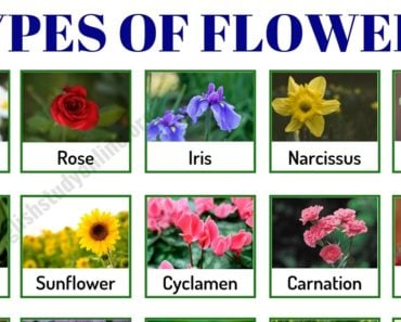 Types of Flowers: List of 50+ Popular Flowers Names in English 3