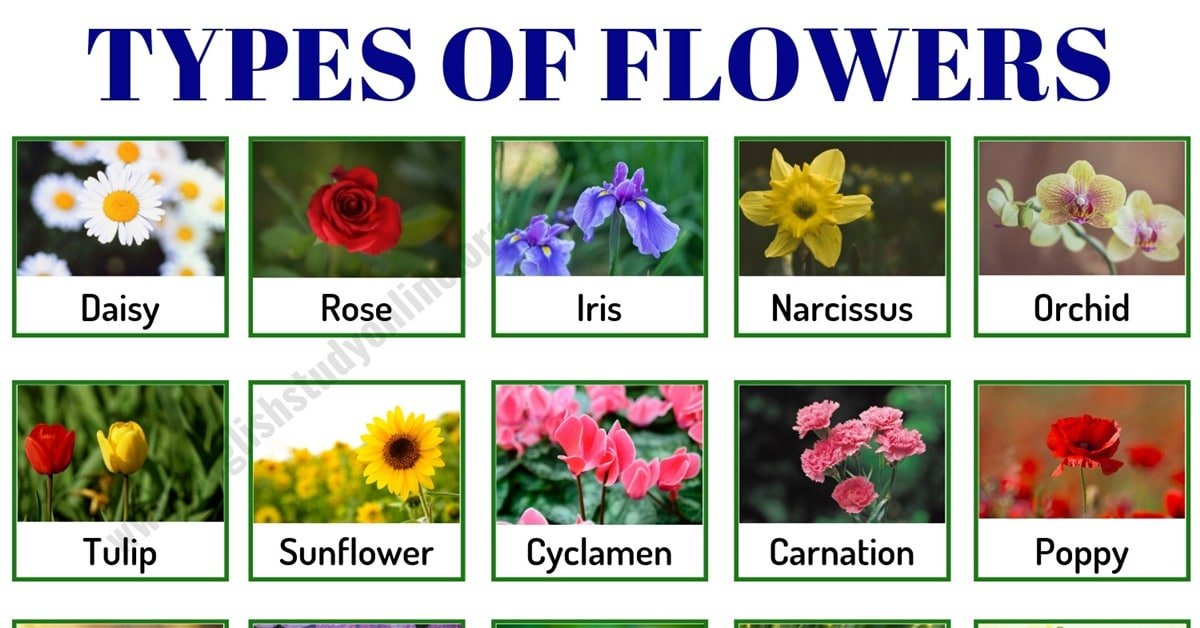 Types of Flowers: List of 50+ Popular Flowers Names with Their Meaning 1