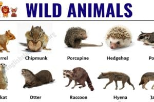 Wild Animals: List of 30+ Popular Names of Wild Animals in English 9