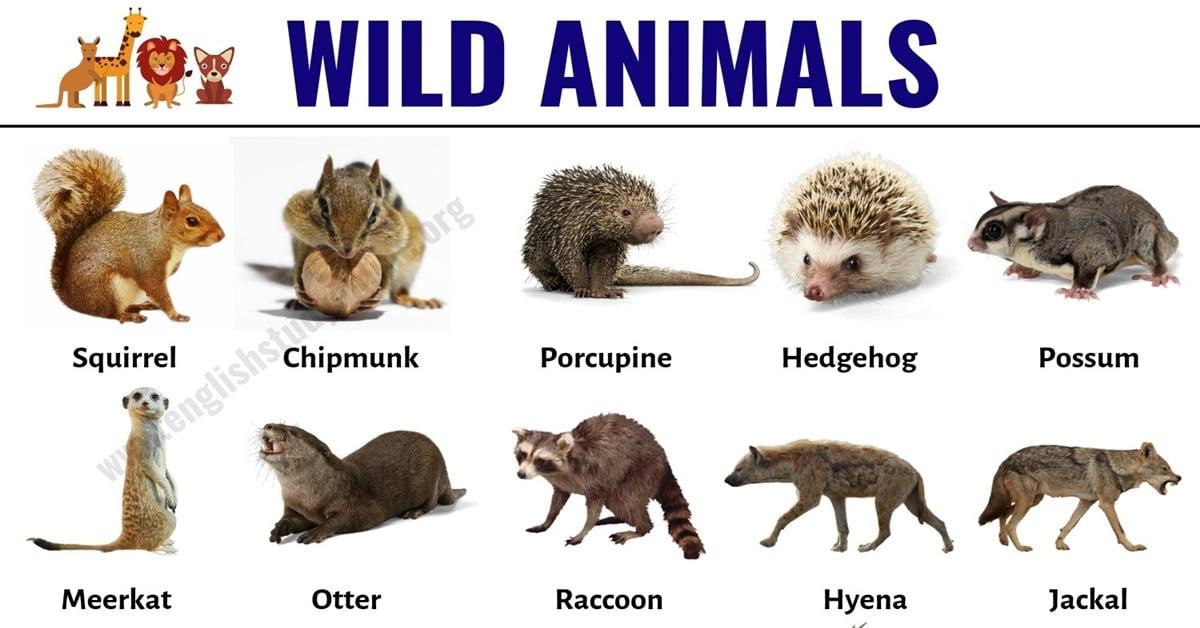 Wild Animals: List of 30+ Popular Names of Wild Animals in English 1