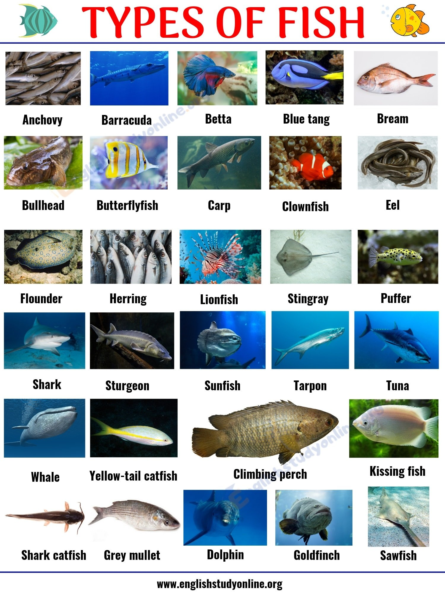 Types of Fish: List of 29 Popular Fish Names with Pictures in English 2
