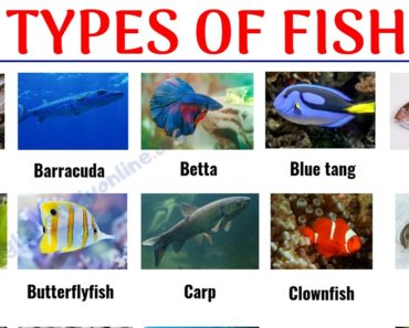 Types of Fish: List of 29 Popular Fish Names with Pictures in English 4