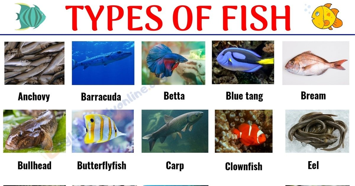 Types of Fish: List of 29 Popular Fish Names with Pictures in English 1