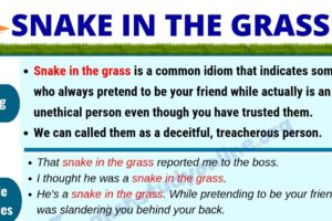 Snake In The Grass: Definition, Useful Examples & Synonyms List 6