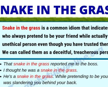 Snake In The Grass: Definition, Useful Examples & Synonyms List 5