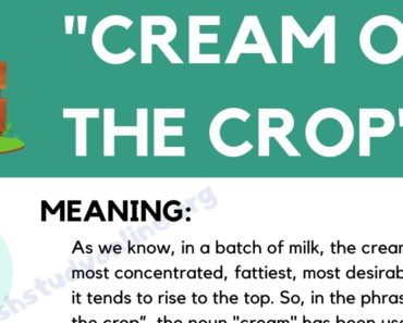 Cream of the Crop: How Do You Define This Trendy Idiom in English 3