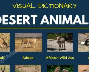 Desert Animals: List of 60+ Animals That Live in the Desert with Examples 6