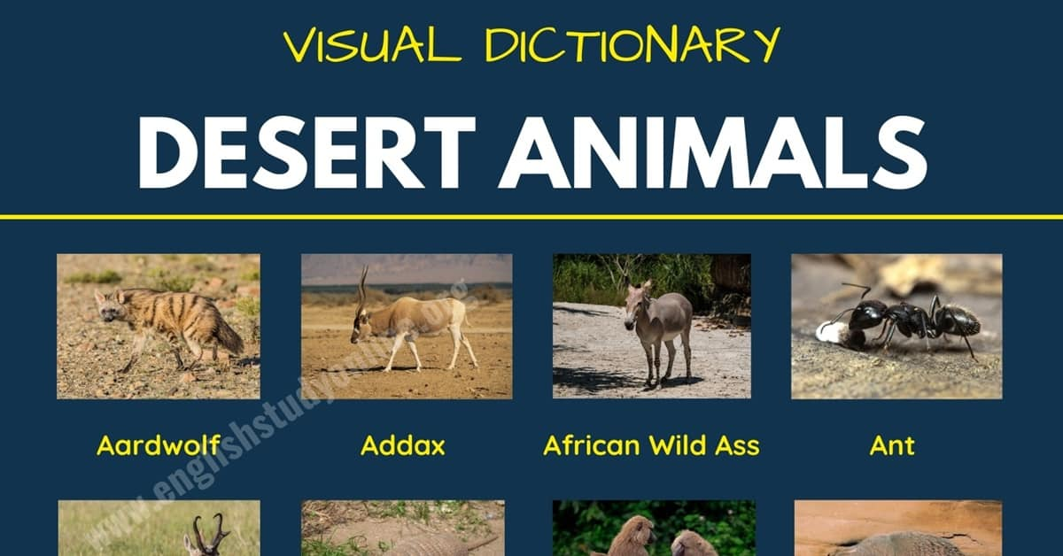 Desert Animals: List of 60+ Animals That Live in the Desert with Examples 1