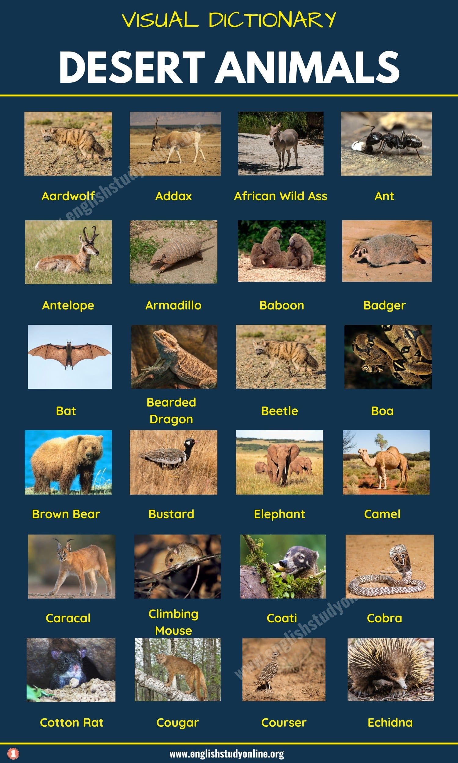 Desert Animals: List of 60+ Animals That Live in the Desert with Examples 2